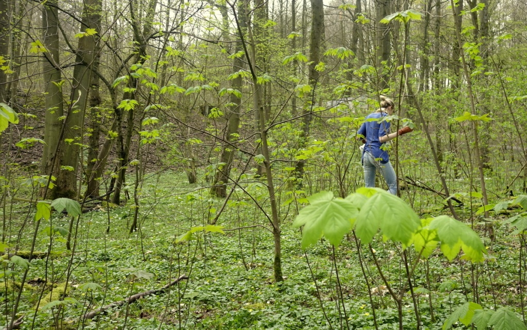 Caroline foraging