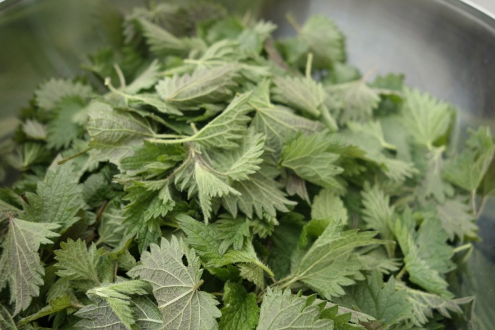 PIcked nettles