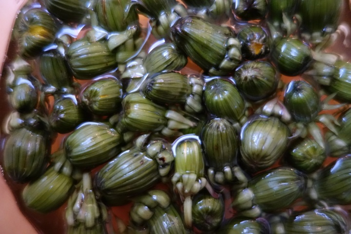 Dandelion buds in vinegar